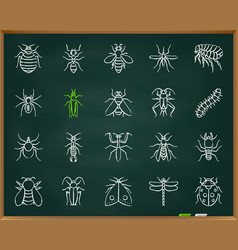 Danger insect chalk draw line icons set vector