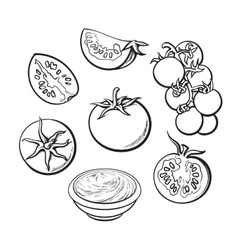 Sketch style set of ripe vector image