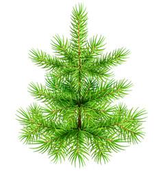 green small christmas pine fir tree vector image vector image