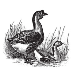 Chinese goose vintage vector