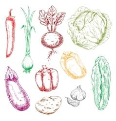Color farm and garden vegetables sketches vector