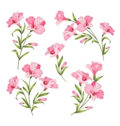 Flower branches set vector