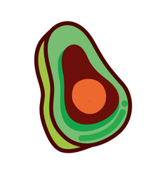 Green delicious avocado healthy fruit vector