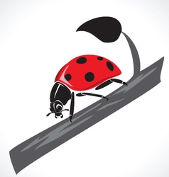 Lady bug graphic vector