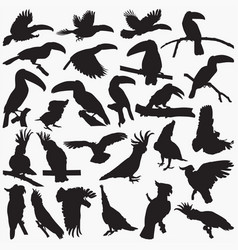 toucan cockatoos silhouettes vector image