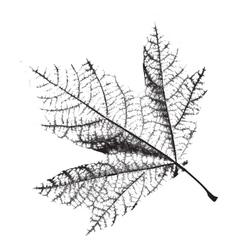 Distress leaf texture vector