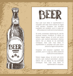 bottle of beer in ink hand drawn style vector image