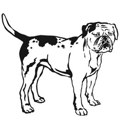decorative standing portrait of american bulldog vector image