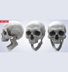 Detailed graphic photorealistic human skulls set vector