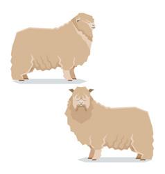 flat geometric leicester long-wool sheep vector image