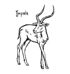 Impala - sketch hand drawn vector