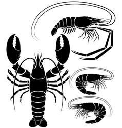 Lobster shrimp and prawn vector