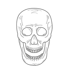 Sketch of the skull with open mouth vector