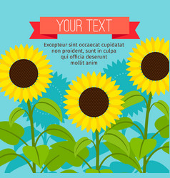 sunflower beautiful card vector image