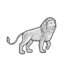 walking lion sketch vector image