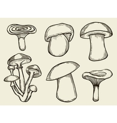mushrooms vector image vector image