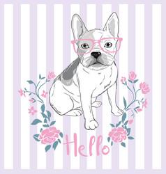 pug dog face - isolated on white background vector image