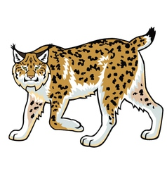 lynx on white vector image