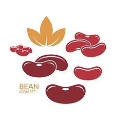 Red kidney bean vector image vector image