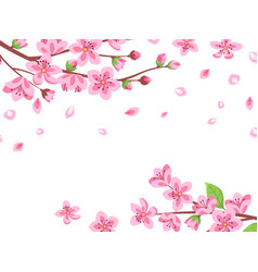 cherry blossom floral sakura branches spring vector image