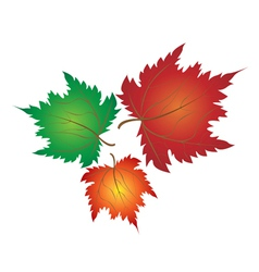 Colorful Maple Leaves on White Backgroud vector