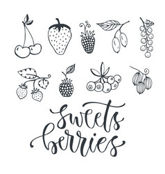 sweet berries hand drawn vector image