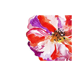 bright watercolor red poppy flower background vector image