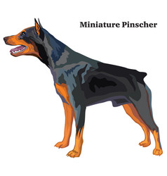 Colored decorative standing portrait of dog vector