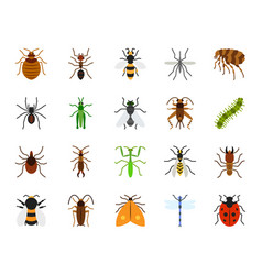 Danger insect simple flat color icons set vector