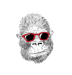 Gorilla red glasses vector
