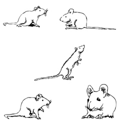 Mice A sketch by hand Pencil drawing vector image