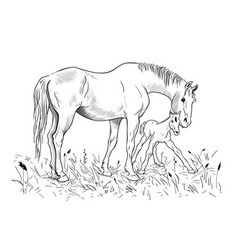 Mare and foal vector