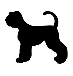 Black silhouette of giant schnauzer isolated on vector
