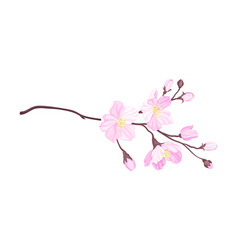 Blooming cherry branch with tender pink flower vector