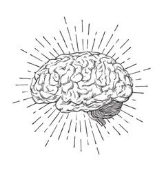 Hand drawn human brain with sunburst vector