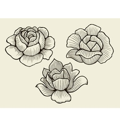 Hand drawn sketch flowers vector
