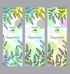 herbal tea collection peppermint banner set vector image