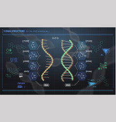 Hud infographic elements with dna structure vector