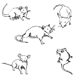 Mice A sketch by hand Pencil drawing vector