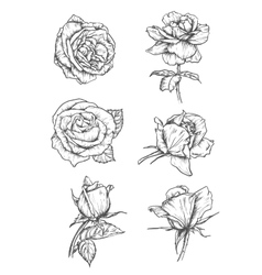 Rose buds icons Flower sketch emblems vector