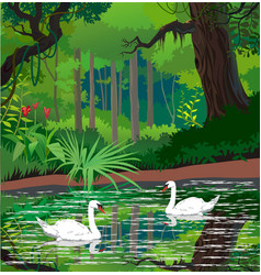swans on a forest pond vector image