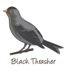 brown trasher color vector image