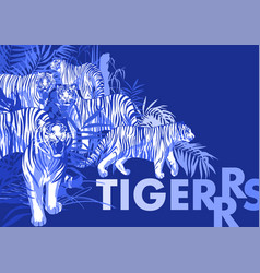 Graphic design with tigers standing walking and vector