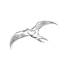 Hand drawn flying black skimmers beautiful animal vector