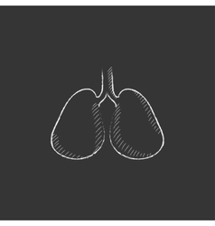 Lungs drawn in chalk icon vector