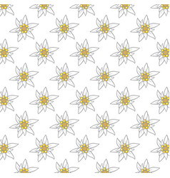 pattern with edelweiss flowers vector image