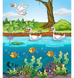 Swans and fishes vector