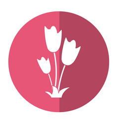 women day tulip bunch flower shadow vector image