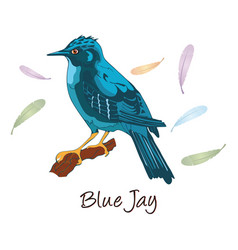 blue jay color vector image