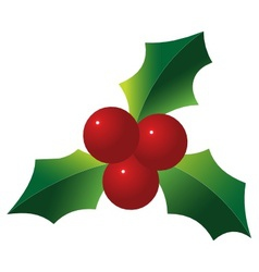 holly berries vector image vector image